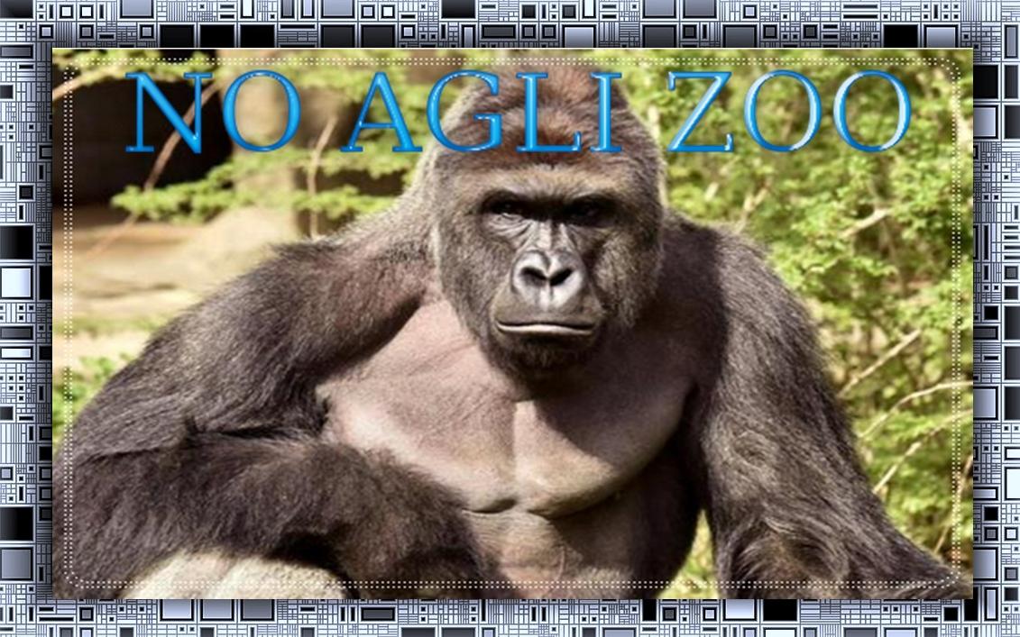 Bimbo caduto nel recinto gorilla – Nessuna accusa penale alla madre – CIRCUSpage