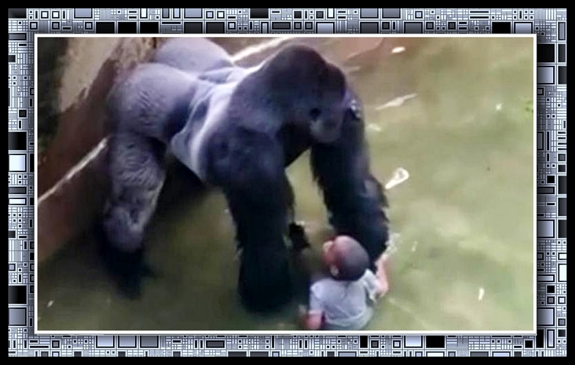 gorilla e bimbo